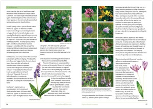 Ewyas Harold Common guide book (spread)