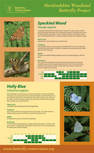 Woodland Butterfly Project display panel