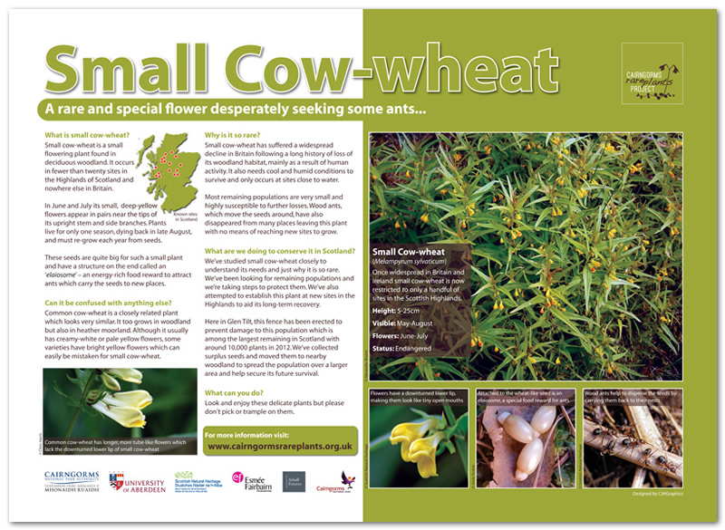 Small Cow-wheat interpretation panel