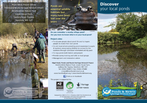 Pond and Newts Project leaflet (outside)