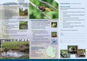 Pond and Newts Project leaflet (inside)