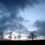 skeletal-trees-at-dusk