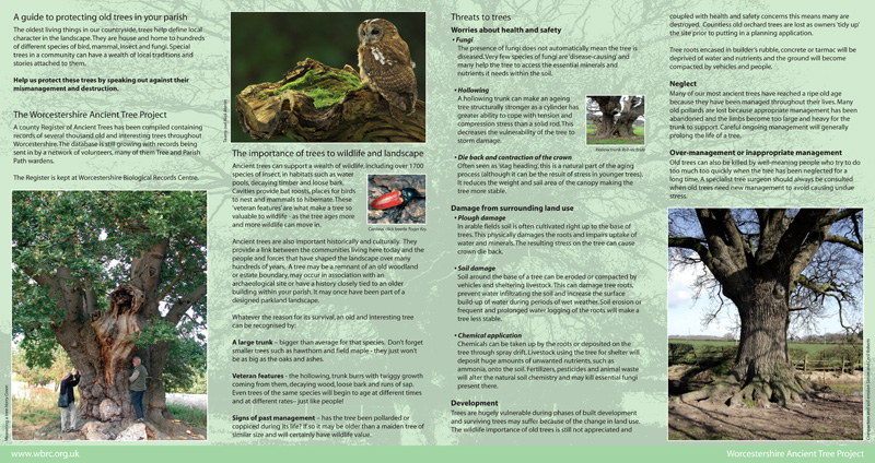 Tree Protection leaflet (inside)