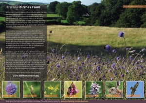 Birches Farm leaflet (inside)