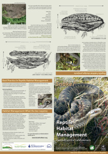 Reptile Habitat Management leaflet (outside)