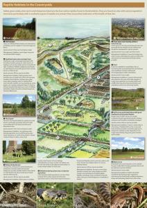 Reptile Habitat Management leaflet (inside)