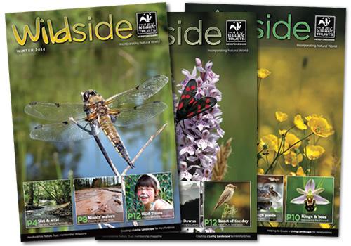 Newsletters & brochures